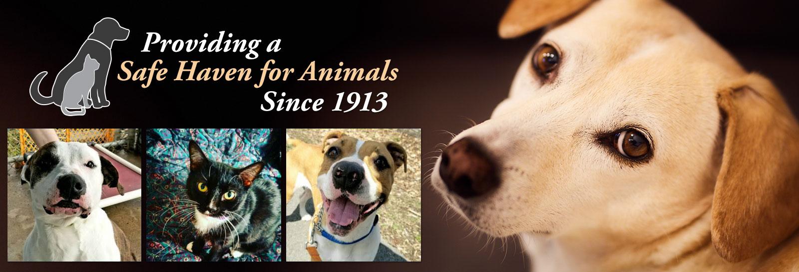 Home - Herkimer County Humane Society